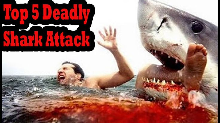 Top 5 Deadly Shark Attack & Horrific Shark Attack Footage Caught On Tape 2016  Have you ever imagined being attacked by the shark? In this video we take a look of the top 5 horrific great white shark attack footage caught on tape 2016. How scary it is to come face to face with the shark? Commend down below and share your thought about these shark attack videos.  submarine shark attack footag real life shark attack footage. underwater shark attack footagegreat white shark attack footagereal…