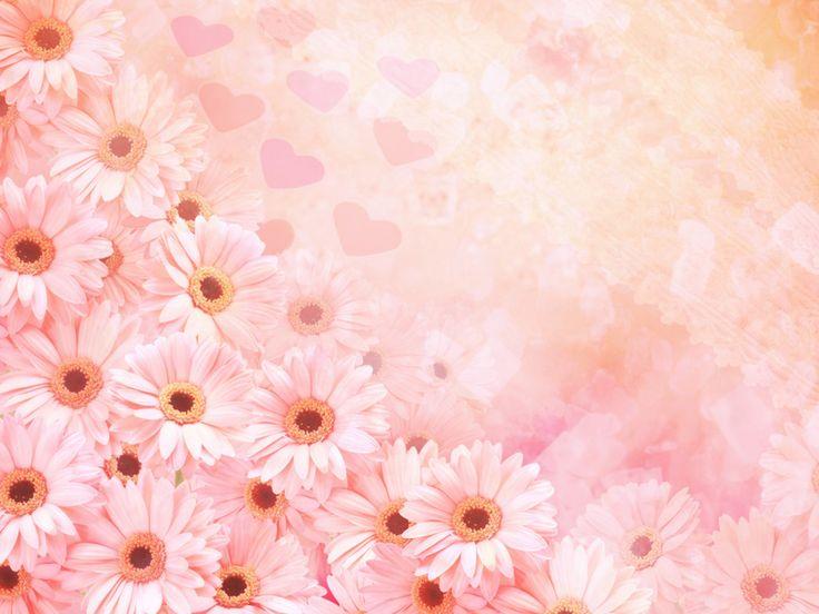 Beautiful-Pink-Flowers-images-HD-Photos.jpg (1024×768)