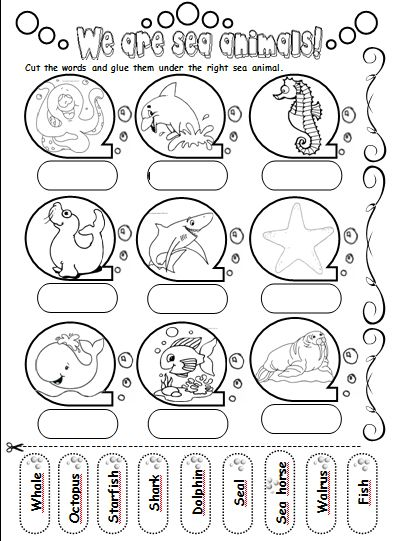 We are sea animals! - Teacher's love