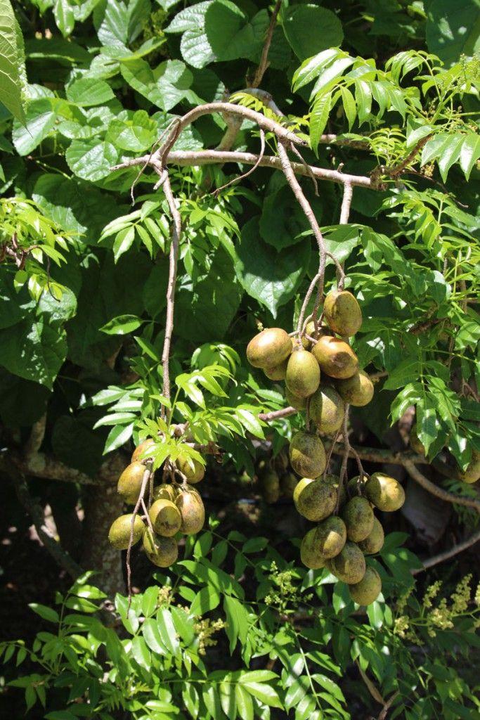 Fruit Nurseries In Florida Thenurseries