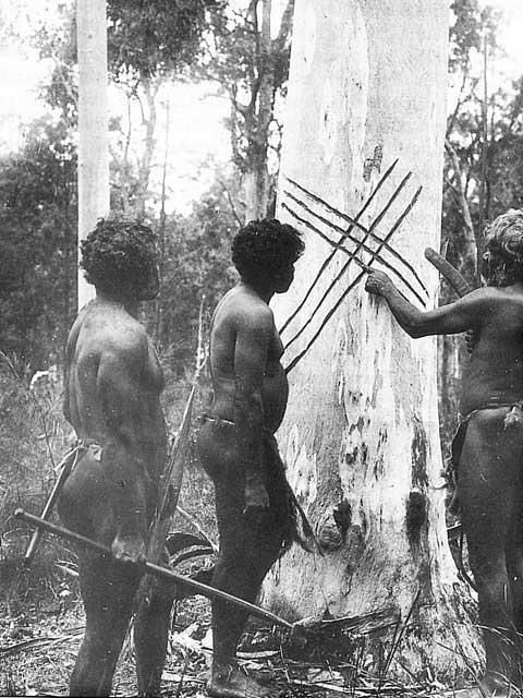 Awabakal elder of Port Macquarie near Newcastle, north of Sydney, carving lines on a tree. Downloaded from www.blueswarmi.com