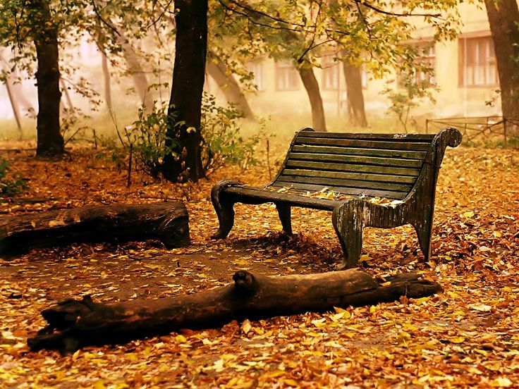 Beautiful Park Bench Photo: This Photo Was Uploaded By Surfsunskate. Find Other Park  Bench Pictures And Photos Or Upload Your Own With Photobucket Free Image  And .