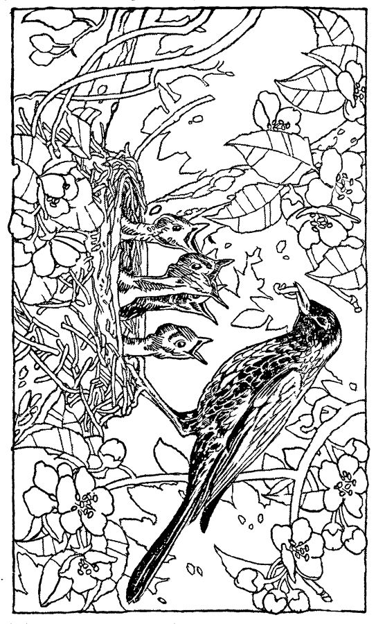 Bird Coloring Pages 5 Embroidery Redwork 2 Bird