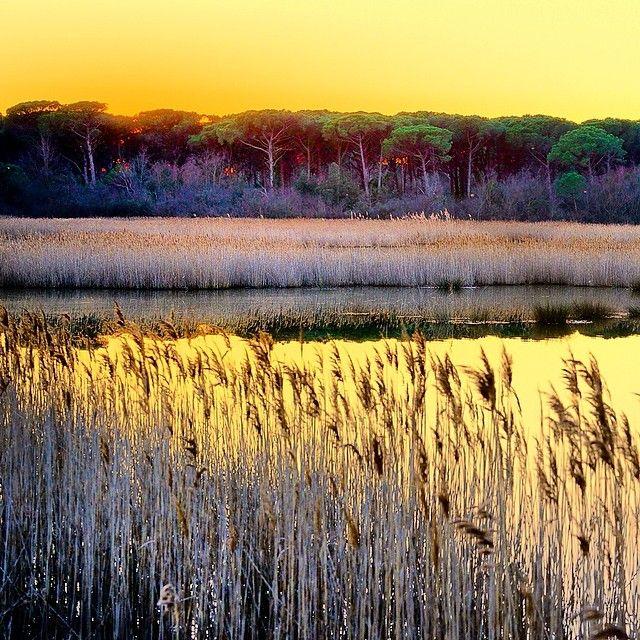 Tramonto dorato a Ortazzo, all'interno della Pineta di Classe, uno dei luoghi più incontaminati e con maggiore biodiversità di tutta la costa romagnola