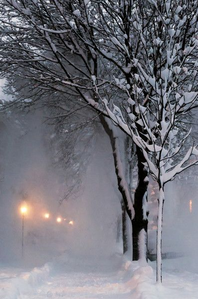winter freeze  ..  X ღɱɧღ ||  Caption: heavy snow falls from the trees to make a white out.