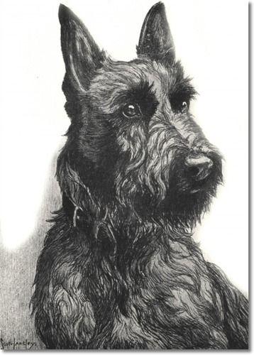 Nina Scott Langley - Hutchinsons Book Of The Dog - Nina Scott-Langley - Scottish Terrier Painting