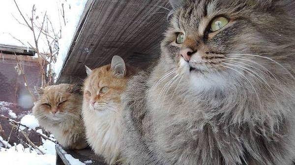 OK.RU Суровая сибирская братва - это вам не лысые египетские кошки