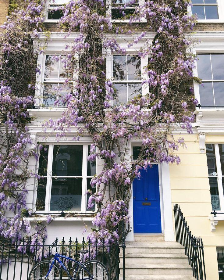 Walls of wisteria in Primrose Hill #london #weekendmoments #primrosehill #wisteria #gmgtravels #willjourney