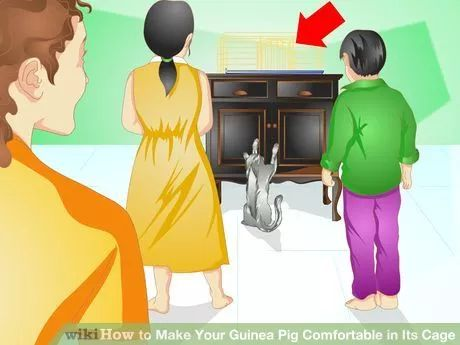 Image titled Make Your Guinea Pig Comfortable in Its Cage Step 4