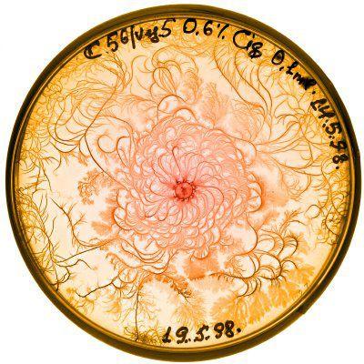 Prune your petri