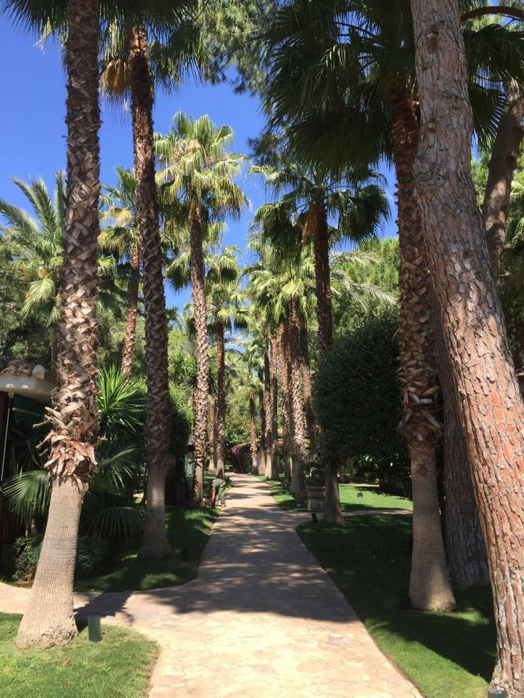 Paseo entre palmeras dentro del Resort El Oasis en l'eliana 'Valencia)