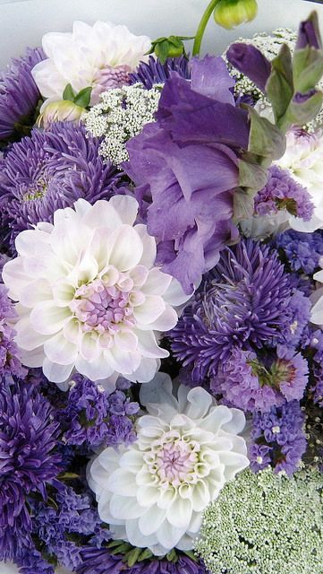 Dahlias and Chrysanthemums