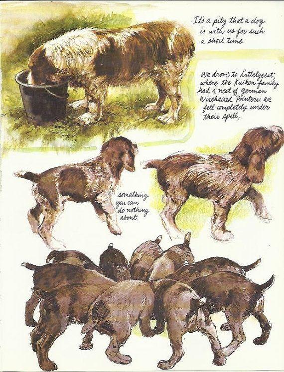 De draadharige Duitse door Rien Poortvliet 1983 kleur hond