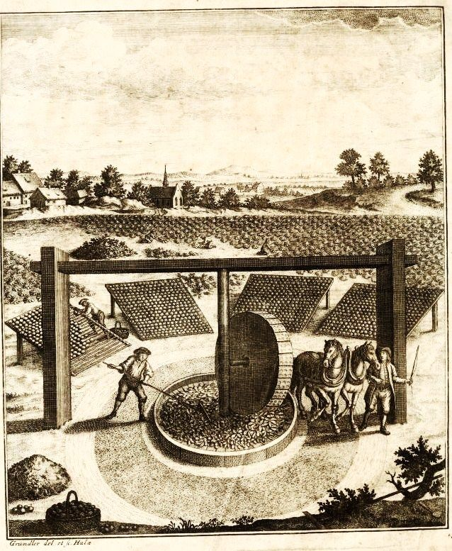 Broyage des feuilles dans un moulin pastellier (Thuringe, 1752). On s'intéresse à l'histoire du pastel à Brin de Cocagne