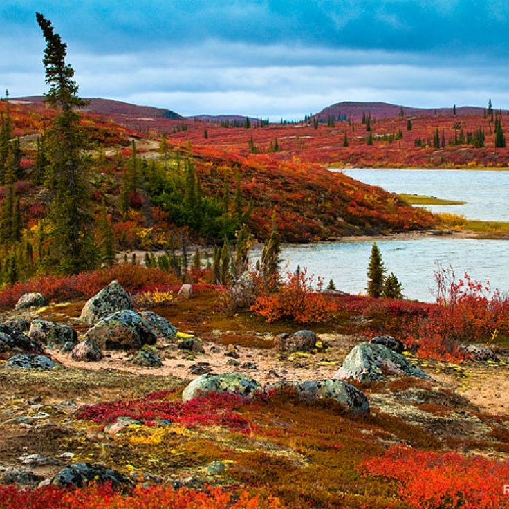 Explore the beauty of the barrens on foot with a guided hike! Northwest Territories