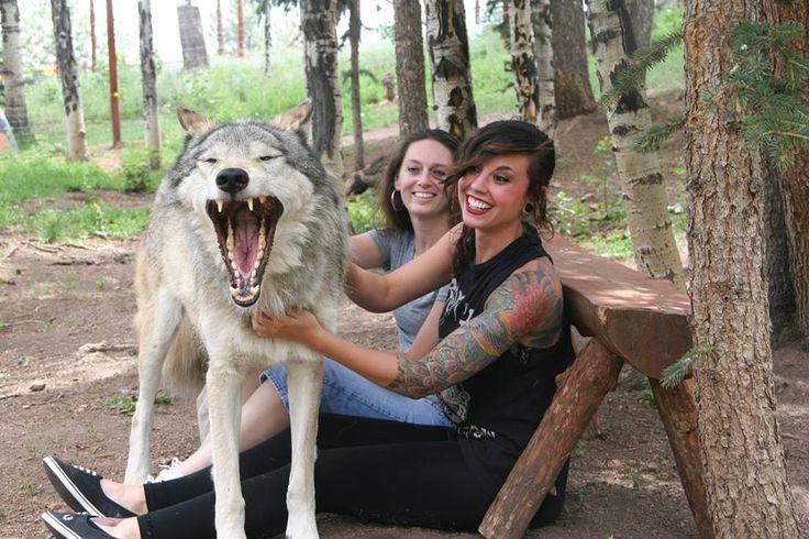 wolf sanctuary in Colorado