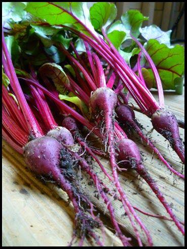 Patio Of Pots How To Grow Beets In Containers Veggie Gardening Pinterest Gardens