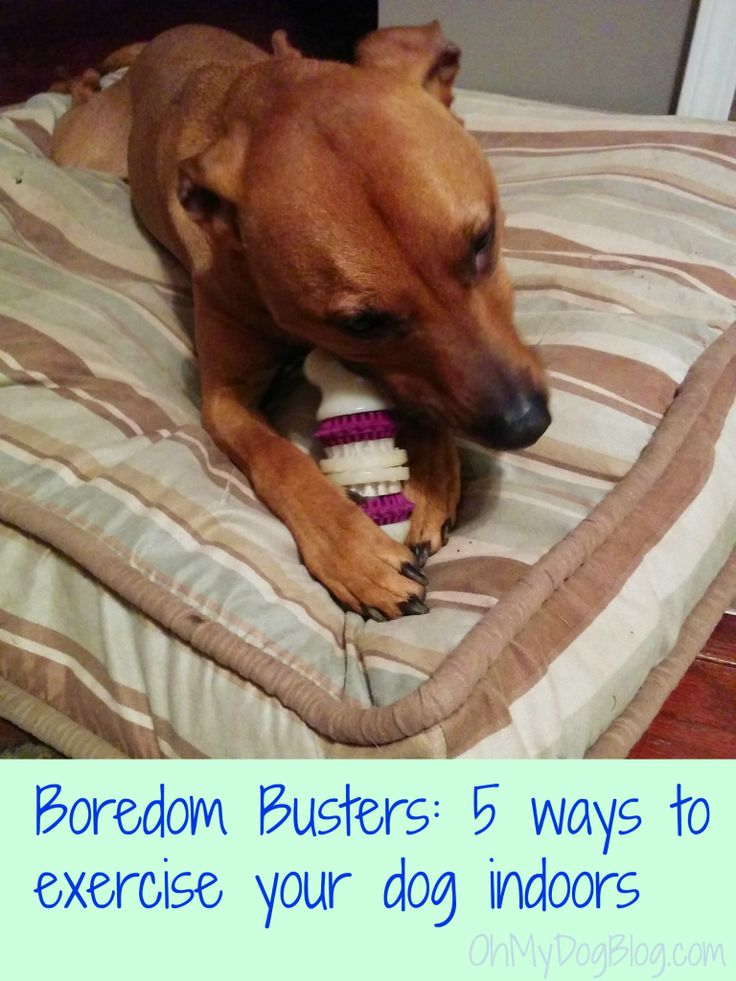 Boredom Busters 5 ways to exercise your dog indoors- We recognize that toy....