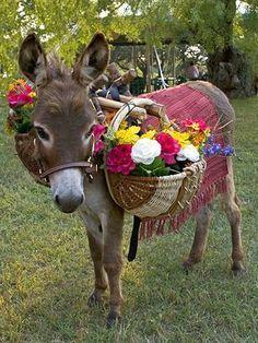 Angel, Laura an Nadina's donkey