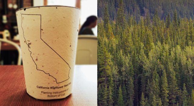 #Sustainability  Coffee cup embedded with seeds grows into native plants
