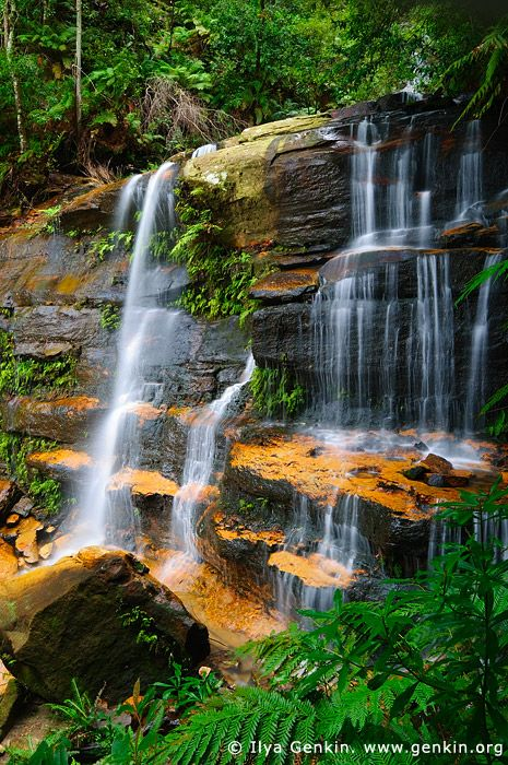 Flat Rock Falls Valley of the Waters Creek, Blue Mountains National Park New South Wales (NSW), Australia © Ilya Genkin