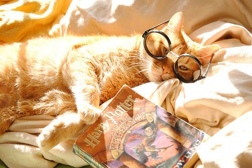 cat; books; reading; Harry Potter; glasses; relax; warm light, ginger; bed; lying; lazy