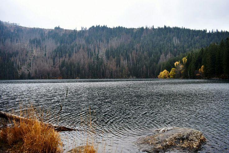 Šumava Černé jezero Les Podzim Krajina
