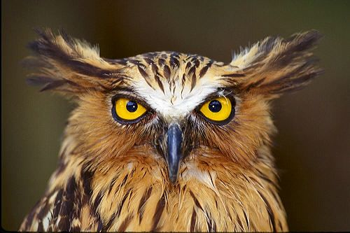Google Image Result for http://www.lostworldarts.com/images/New_Images/500x333/H%2520owl11x16.jpg