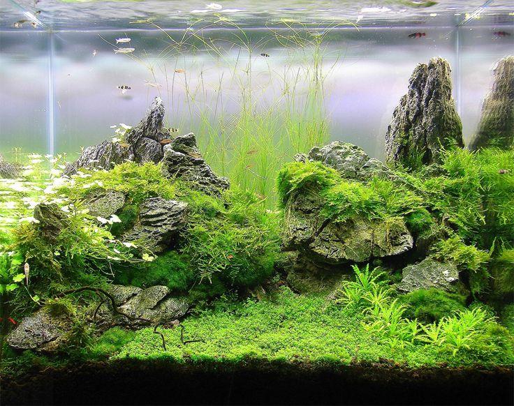 475 best aquascapes images on pinterest planted aquarium for Planted fish tank