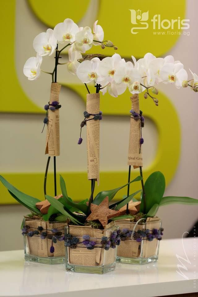 Best images about orchid decor on pinterest