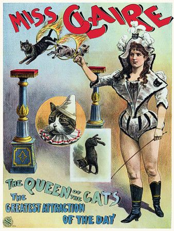 Miss Claire 'The Queen of the Cats'. 1889 Vintage poster -   http://www.vintagevenus.com.au/vintage/reprints/info/C268.htm