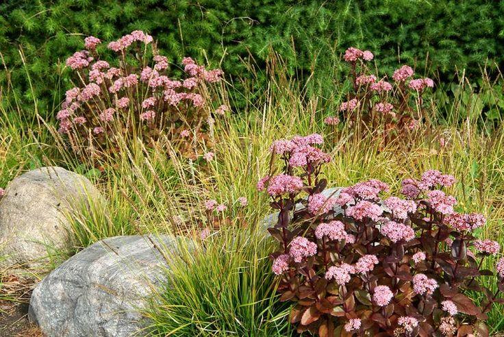 Prydgræsser er de senere år blevet mere og mere anvendt i moderne havedesign, og netop græsserne er med til at give haven struktur.