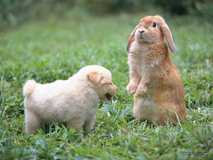 pictures of domestic rabbits - Google Search