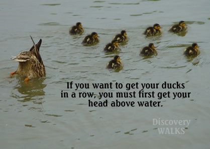 get your ducks in a row - Google Search | Quotes | Rowing ...