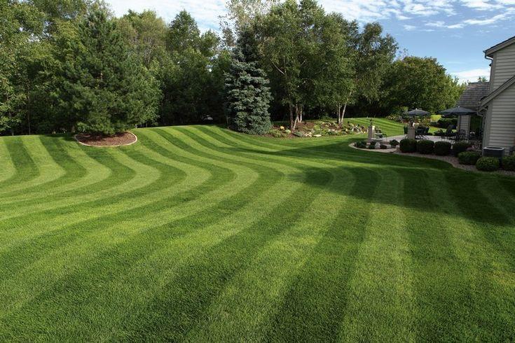 Growing An Organic Garden Tips And Tricks 101 Gardening Ideas Lawn Striping Lawn Fertilizer Grass Pattern