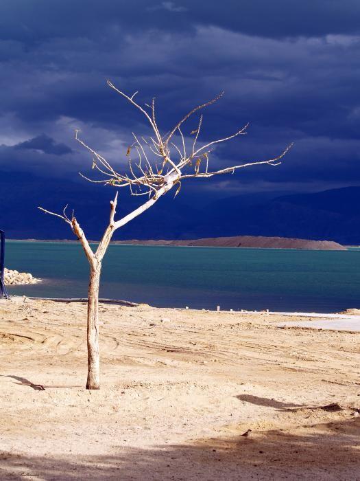 ✮ Tree at the Dead Sea