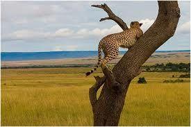 Las sabanas de África son típicas de las sabanas más húmedas. Una de las más famosas es el Serengueti. Sabanas templadas