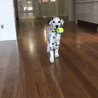 Tip toe puppy.... Attack!