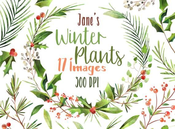 Christmas Wreath 2020 Clipart Watercolor Winter Plants Clipart Christmas Wreath Clipart | Etsy