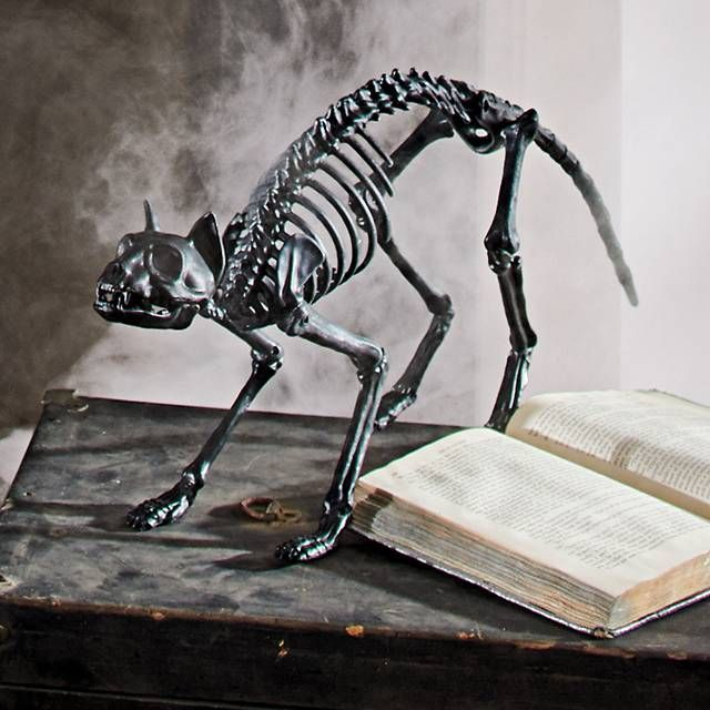 shop for halloween skeletons and skeleton decorations from grandin road halloween haven these halloween skeleton props will complete your spooky display