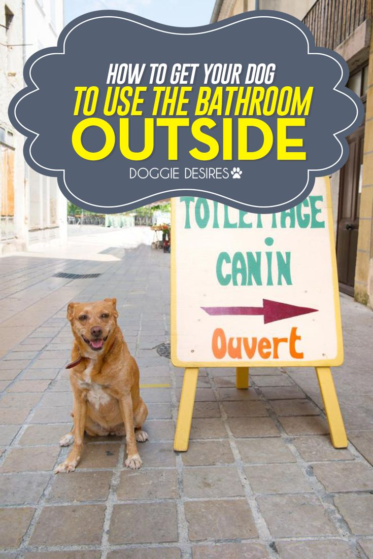 How to get your dog to go to the bathroom outside >> http://doggiedesires.com/how-to-get-your-dog-to-use-the-bathroom-outside/