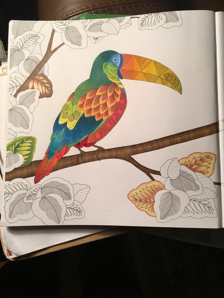 1222 Best Millie Marotta Coloring Books Images On Pinterest