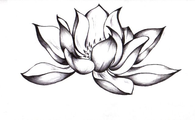 amazing lotus flower tattoo pictures, amazing lotus flower ...