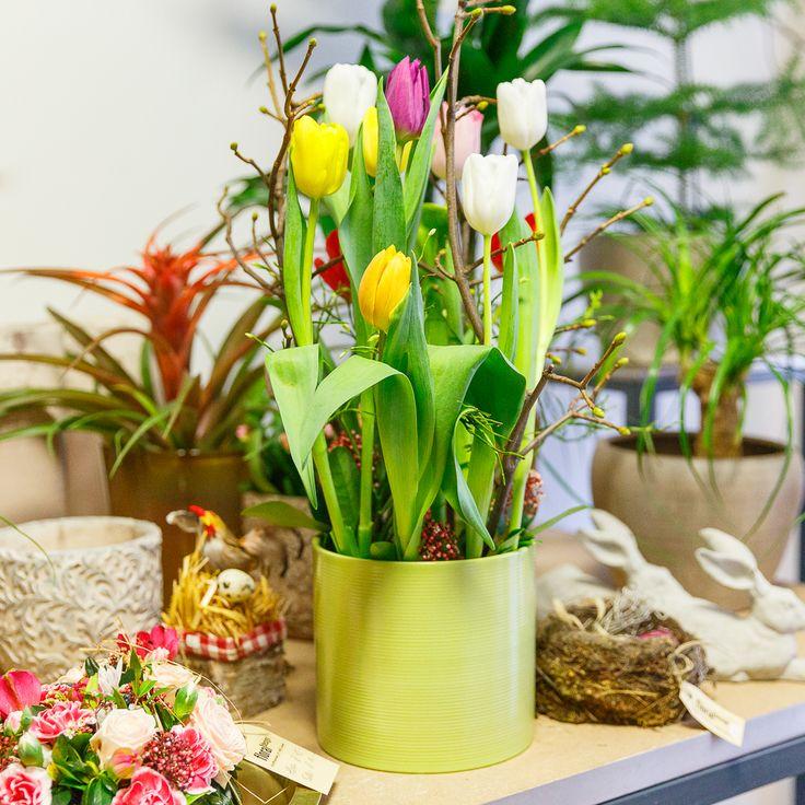 """Orientalische Frühlingsblume - Eine einzige Tulpe war einst mehr wert als ein Menschenleben - so kostbar war sie. Als sie aus dem Iran, aus Afghanistan und Kasachstan in der Türkei ankam, veredelten Sultane ihre Turbane mit der wertvollen Blüte. So bekam sie ihren Namen """"tulipan"""", was so viel bedeutet wie """"Turban"""". Heute lassen sich mit Tulpensträussen keine Häuser mehr bezahlen, dafür erfreuen sie umso mehr unser Herz."""