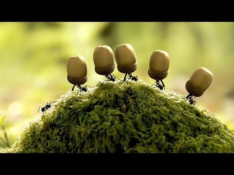 o0)II✒ Minuscule -- La vallée des fourmis perdues Full Movie Online