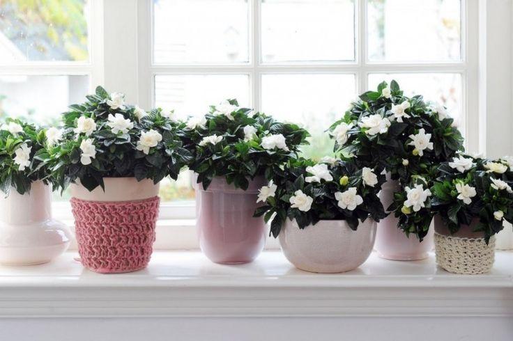 plantas de dormitorio - gardenia