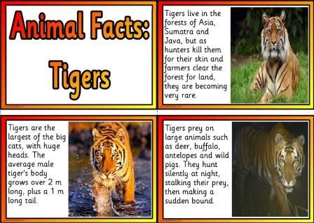 Free Printable Animal Facts Posters  Tigers  Educational