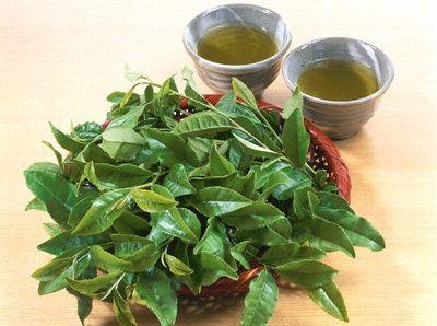 cách làm bột trà xanh tại nhà 15  #bột_trà_xanh #trà_xanh   #blogbeemart #beemart