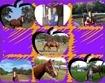 Win western horsemanship