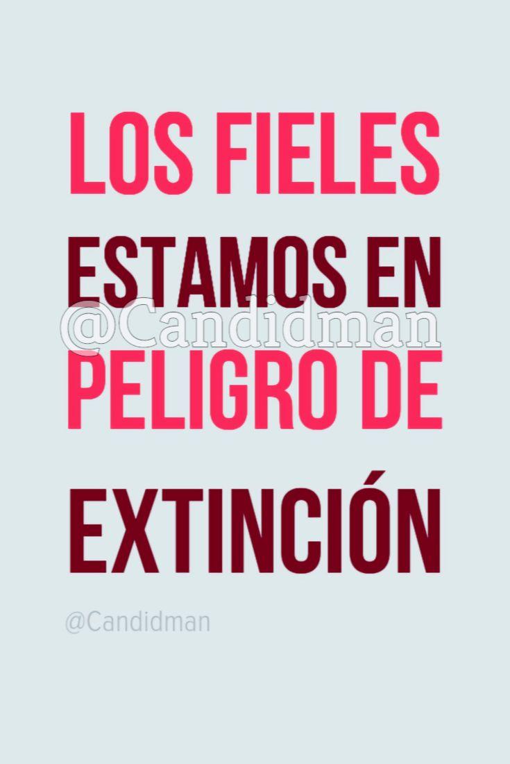 Los fieles estamos en peligro de extinción. @Candidman #Frases Humor Candidman Extinción Fidelidad Fieles Peligro @candidman